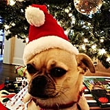 Amber Valletta's dog got into the Christmas spirit. Source: Instagram user ambervalletta