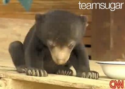 Baby Bear Falls Asleep