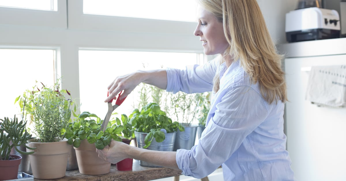 10 Plants You Can Keep on Your Kitchen Windowsill For Cooking
