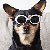 Clout Pet Sunglasses