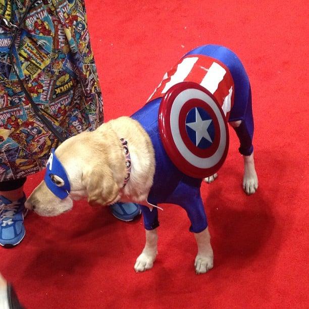 Captain America Creative Dog Costumes Popsugar Tech