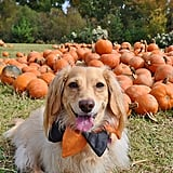 Cute Photos of Dogs in the Fall