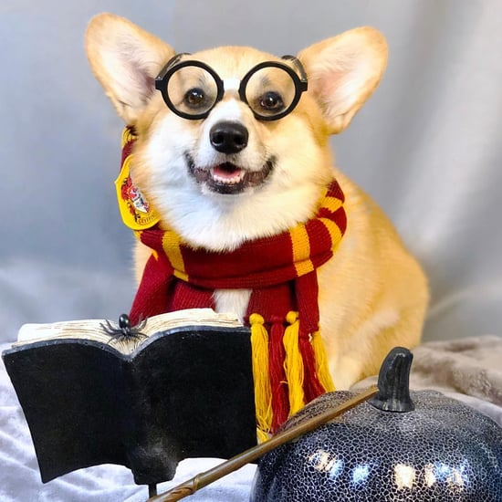Pictures of Corgis in Halloween Costumes