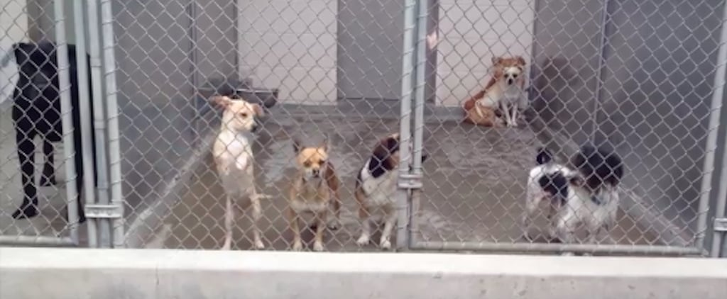 California Animal Shelter Offers Free Adoptions