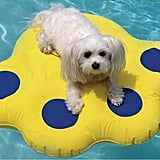 Paws Aboard Inflatable Doggy Lazy Raft for Small Dogs