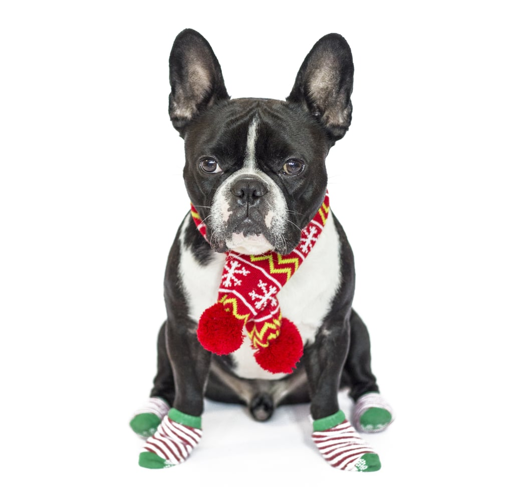 PetSmart Pet Holiday Knit Scarf | Instagram Celebrity Animals ...