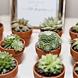 Succulents Favors