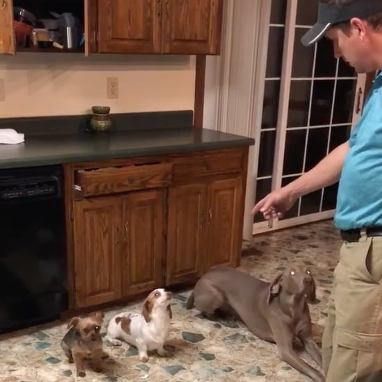 Dad Disciplines Dogs For Eating Out of Trash