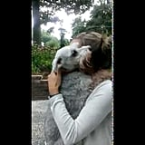 A Dog's Supersweet Reunion With Its Owner