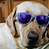 Pick Up a Pair of Doggles