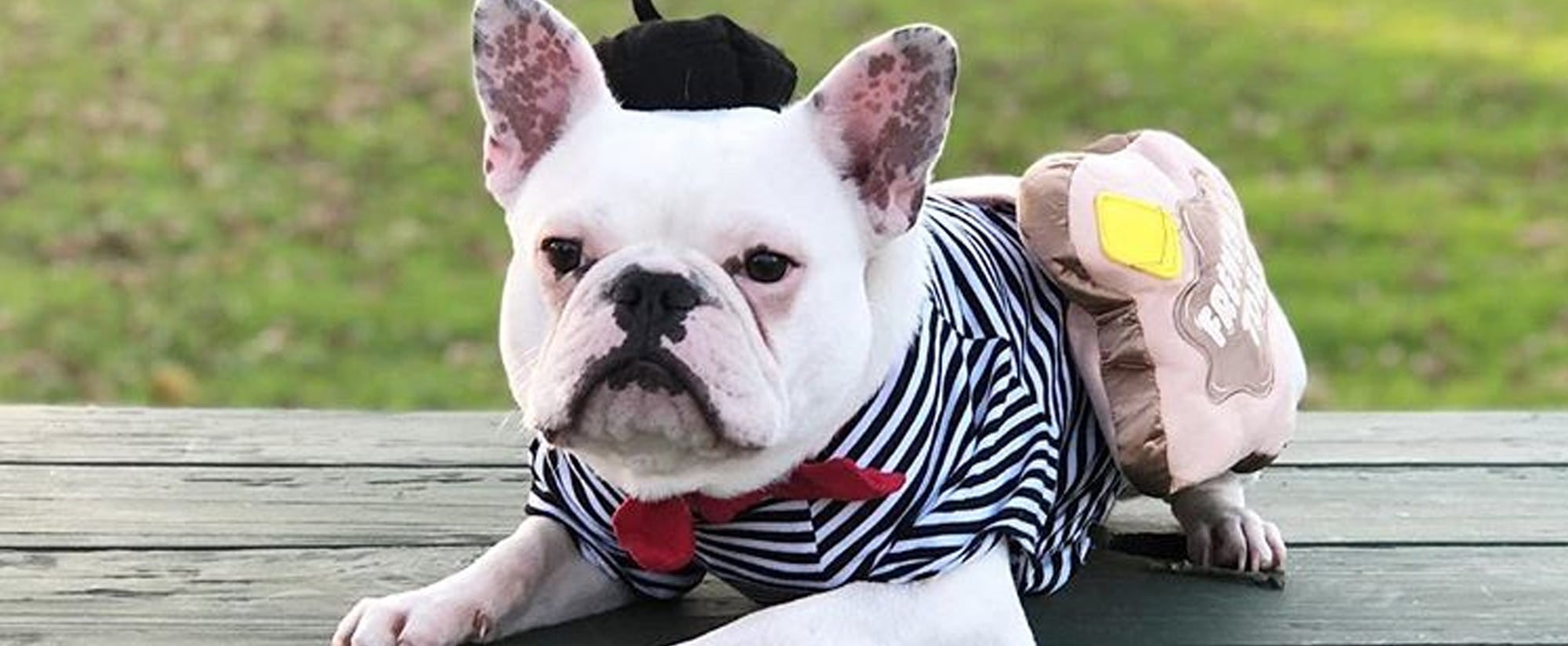 Photos Of French Bulldogs In Halloween Costumes Popsugar Pets