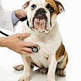 Take Your Pet to the Vet