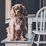 عانقي كلبكِ، أو تبنّي واحداً إن لم يكن لديكِ، أو استعيري كلب صديقتك!