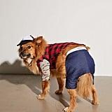 Hipster Dog Halloween Costume