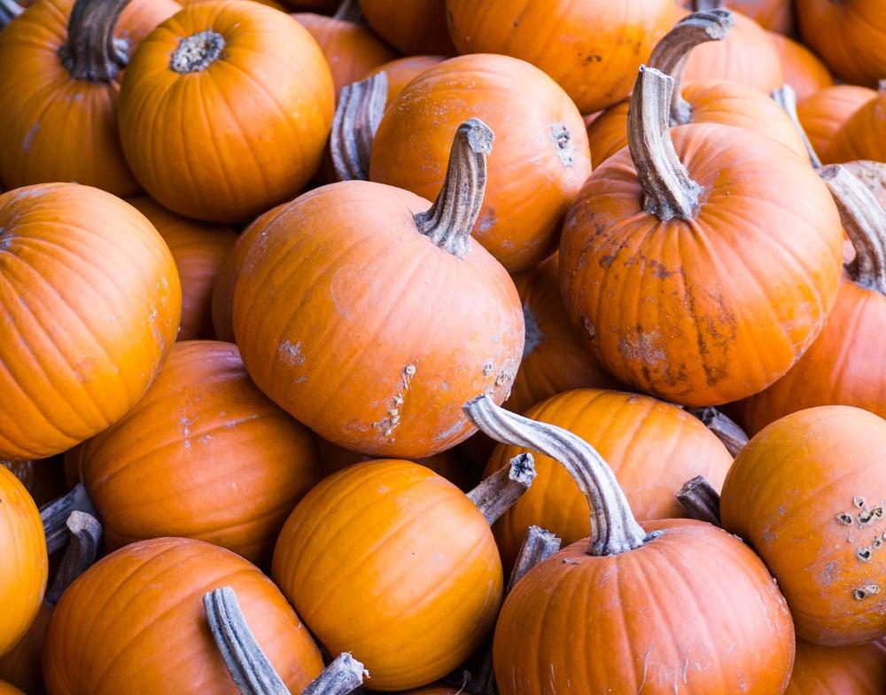 The Winter Food: Pumpkins