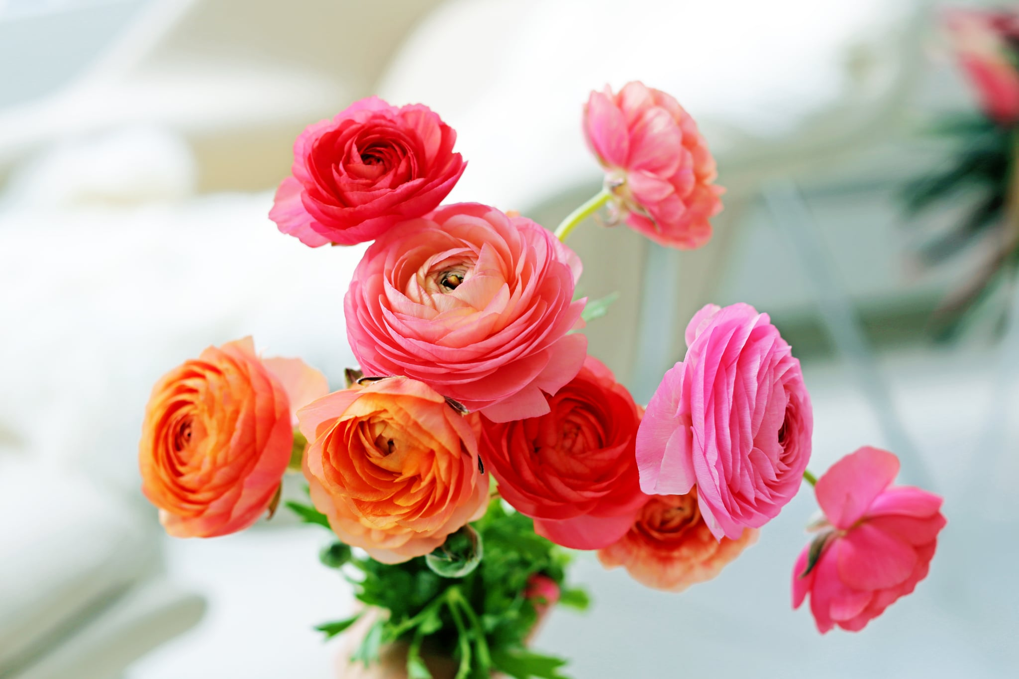 How To Take Care Of Fresh Flowers Popsugar Smart Living