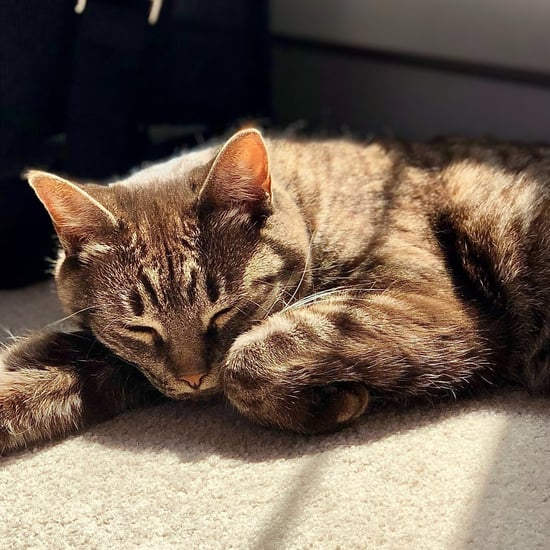 Ways to Calm Down Cats Before Traveling