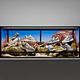 Adidas Originals Snakeskin Collection