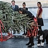 White House Christmas Tree Arrival