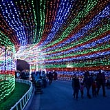 Trail of Lights in Austin, TX