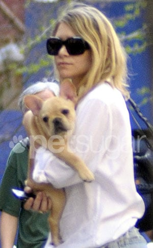 Ashley Olsen Gets a French Bulldog 2010-04-07 15:10:59