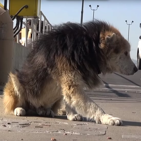 Dog Rescued From Water Treatment Plant | Video