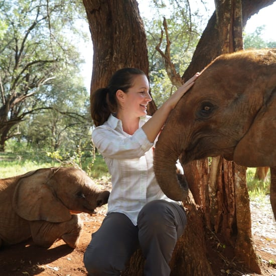 Foster an Elephant Gift