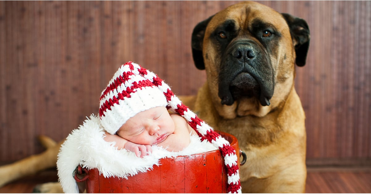 Adorable Baby And Puppy Christmas Picture Ideas Popsugar
