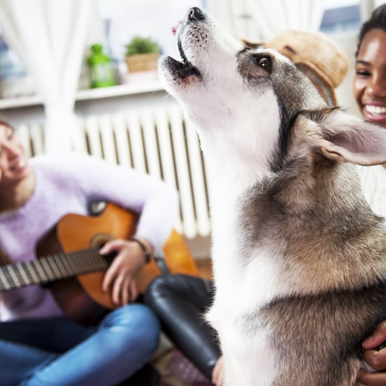 Why Do Dogs Sing? 2 Vets Explain