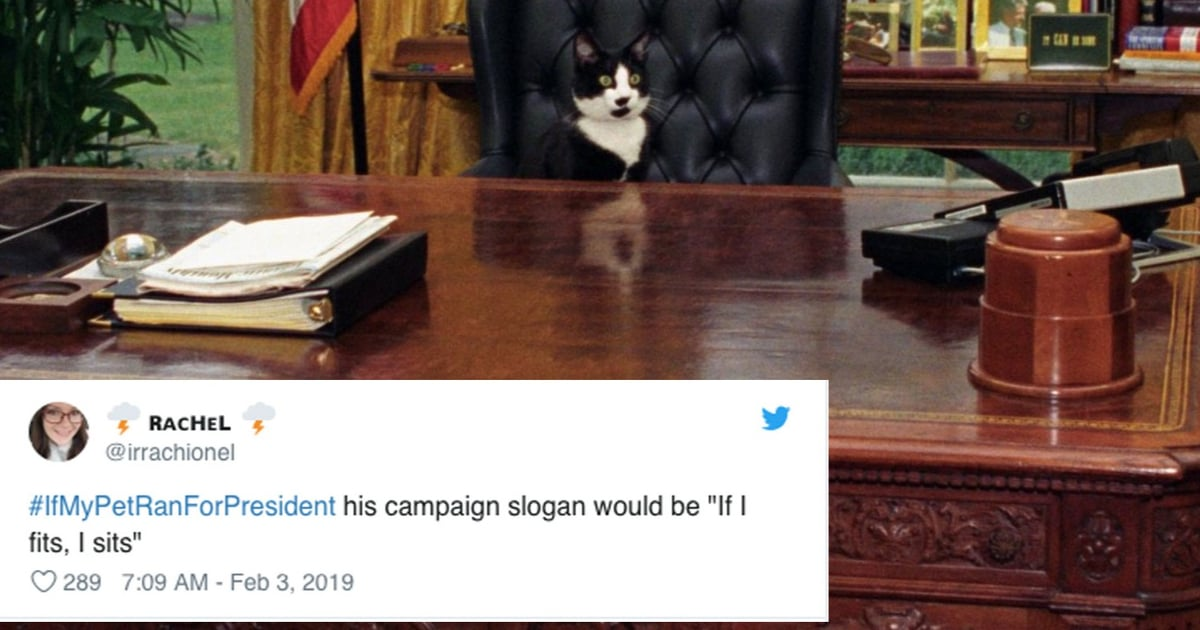 If My Pet Ran For President Hashtag | POPSUGAR Australia
