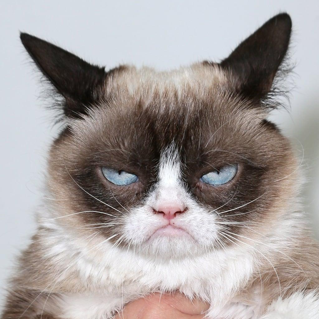 Funny Cat GIFs