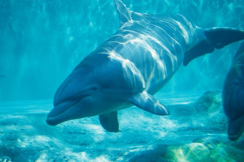 Creature Features: Dolphins and Porpoises