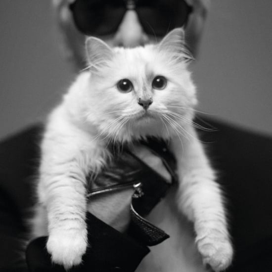 Karl Lagerfeld Talks About Choupette in Harper's Bazaar