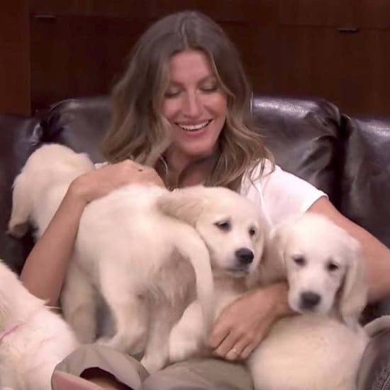 Gisele Bundchen Playing Pup Quiz on Jimmy Fallon May 2017