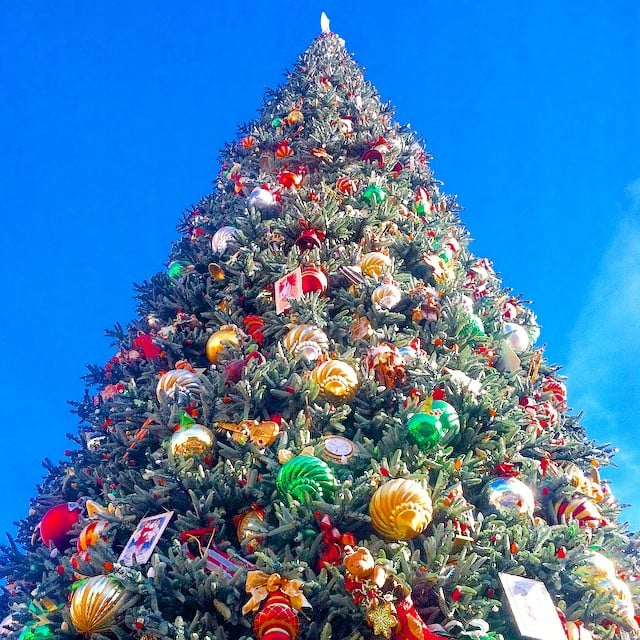 The park has giant gorgeous christmas trees why for Why christmas is the best holiday