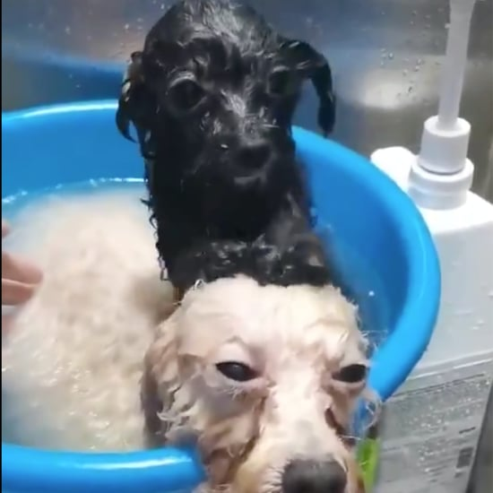 Video of a Dog Getting a Head Rub From His Friend