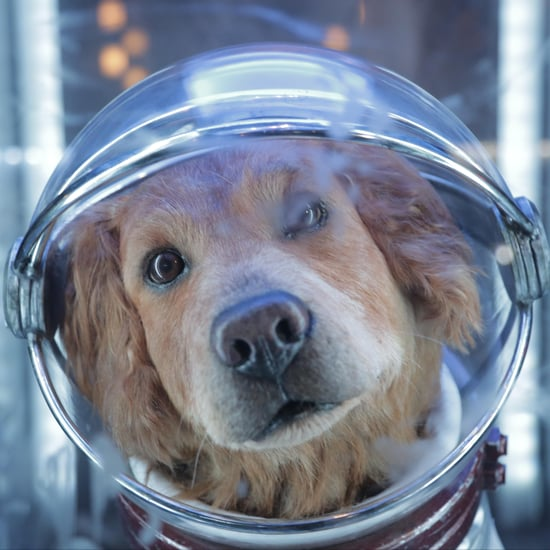 Cosmo the Spacedog From Disneyland's Guardians of the Galaxy