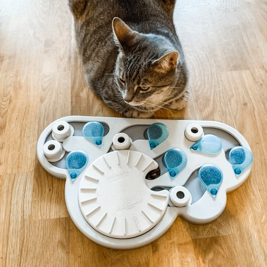 Cat Slow-Feeder Puzzle Review | PetStages Rainy Day