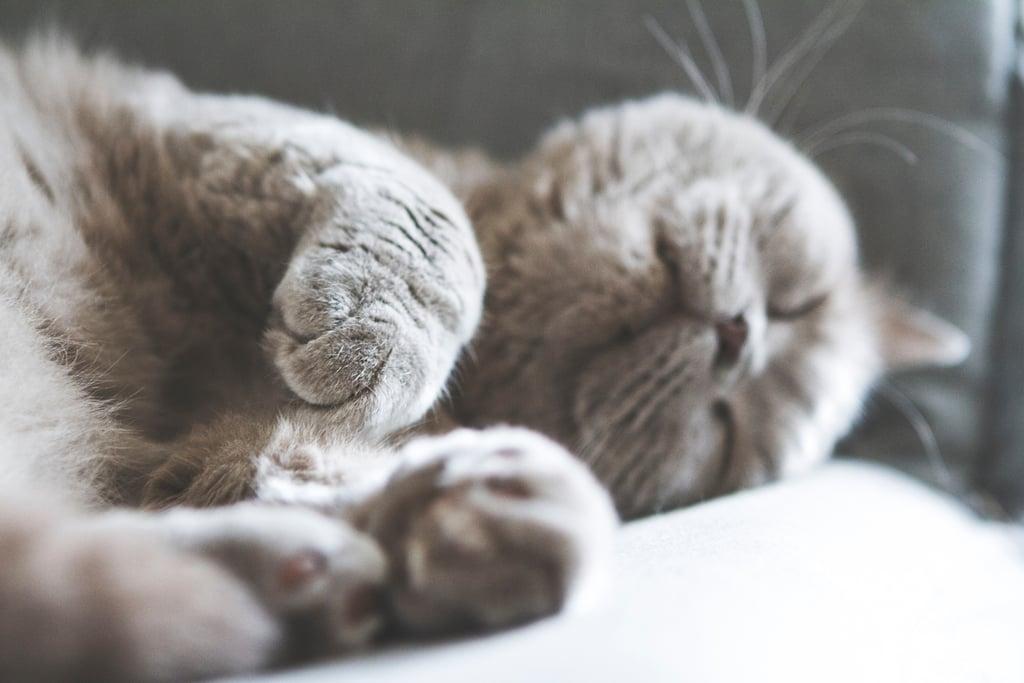 Sooo sleepy.