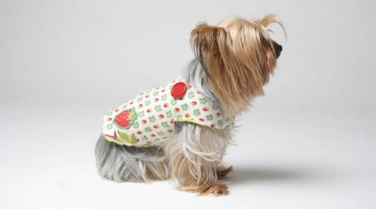 Greendog Design for Sustainable Pup Fashions