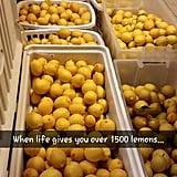 Lemons on Lemons
