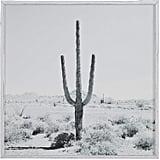 Modern Black and White Desert Cactus Photo