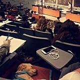 This pup that is so over being in class