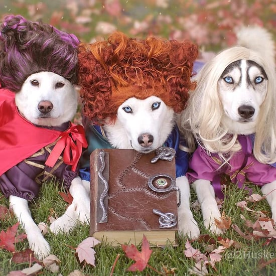 Labrador and Husky Dogs Dressed as Hocus Pocus Witches