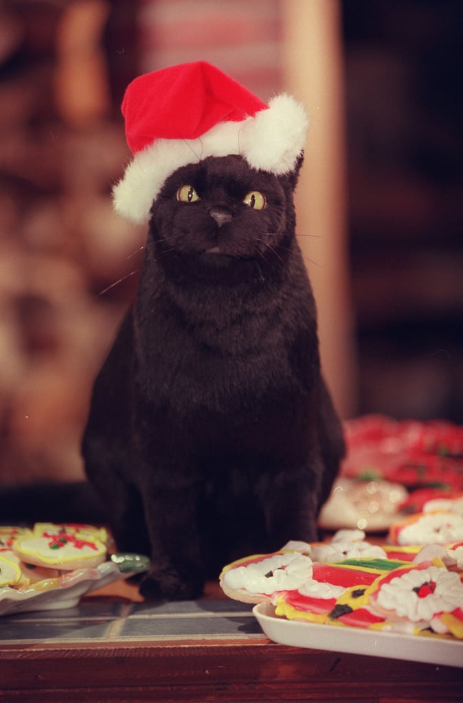 Salem the Cat in a Santa Hat