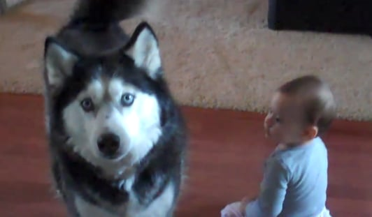 VIRAL VIDEO: 10-Month-Old Baby Sings Duet With Husky