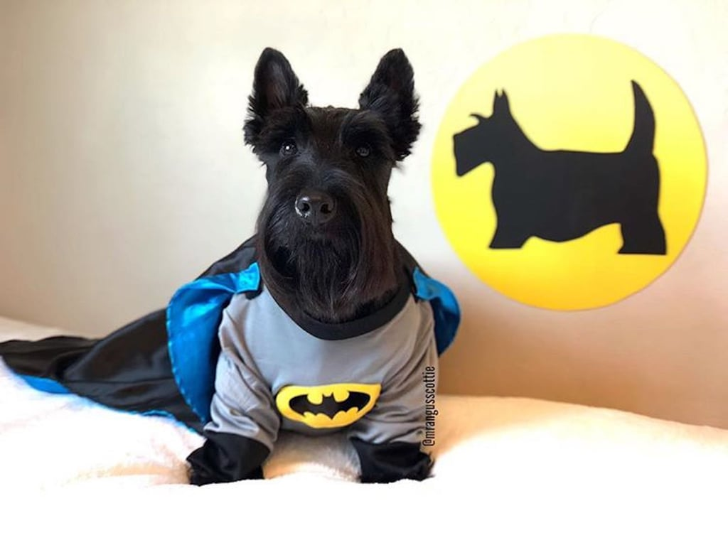 Trying to Pick a Halloween Costume? Angus the Scottie is All the Inspo You'll Need