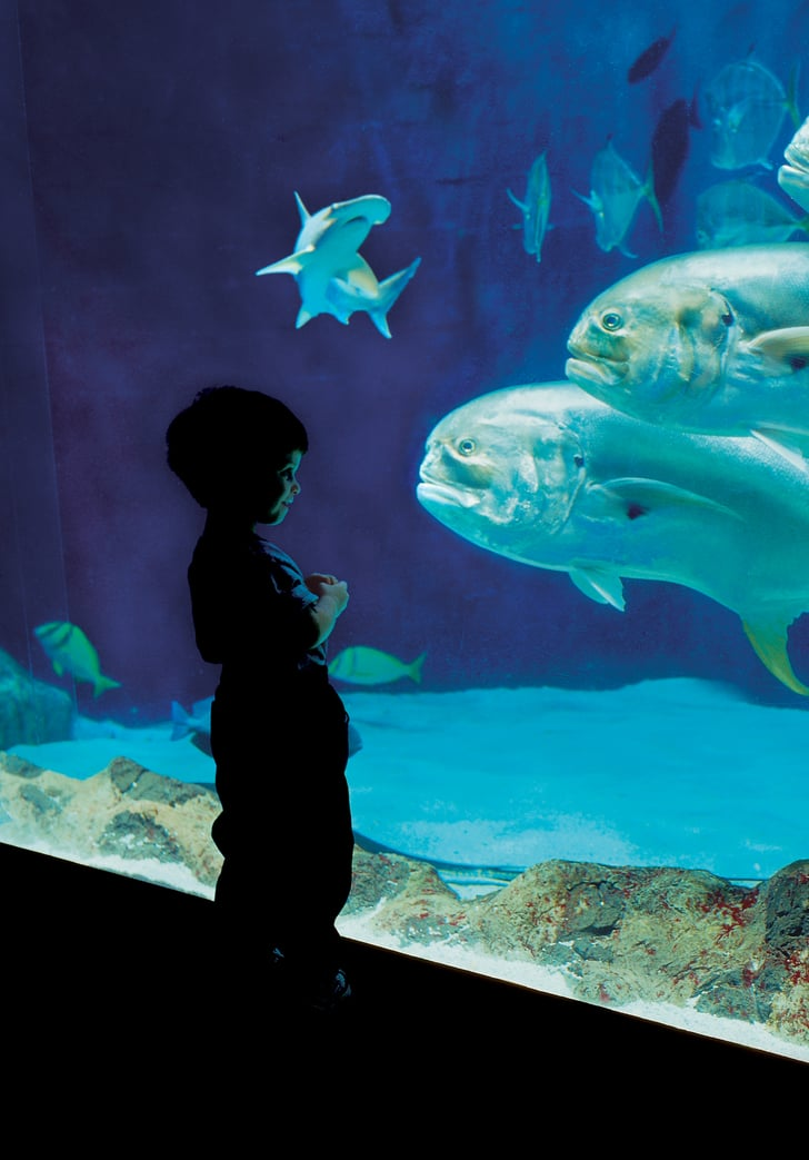 Tennessee Aquarium: Chattanooga, TN | Best Aquariums For ...