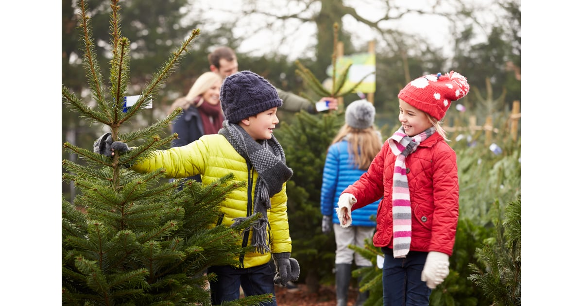 Get a christmas tree from a tree farm family holiday for How did the christmas tree tradition start