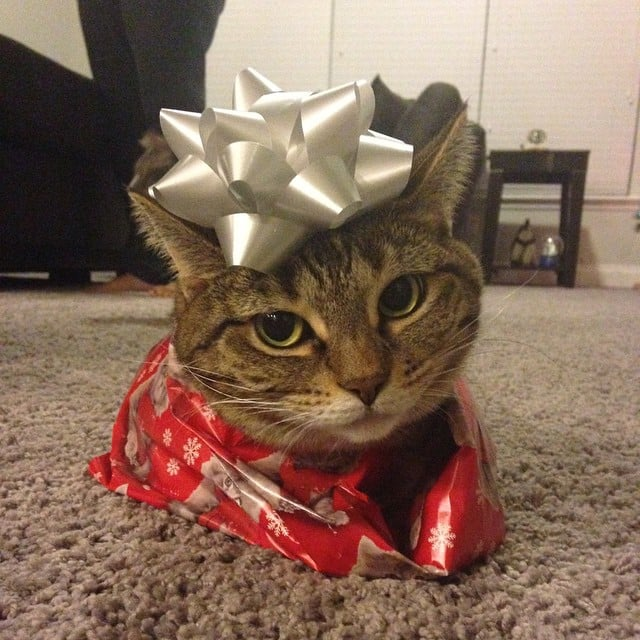 Pets Wearing Christmas Costumes & Pets Wearing Christmas Costumes | POPSUGAR Pets Photo 13